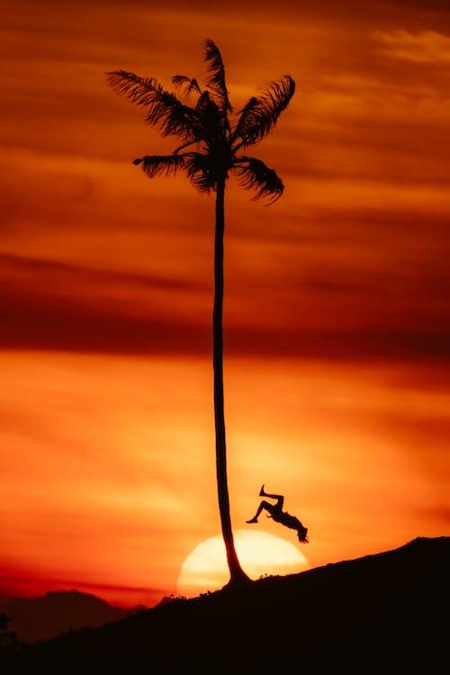 Gratis stockfoto met achtergrondlicht, achterwaartse salto, afgetekend, avond