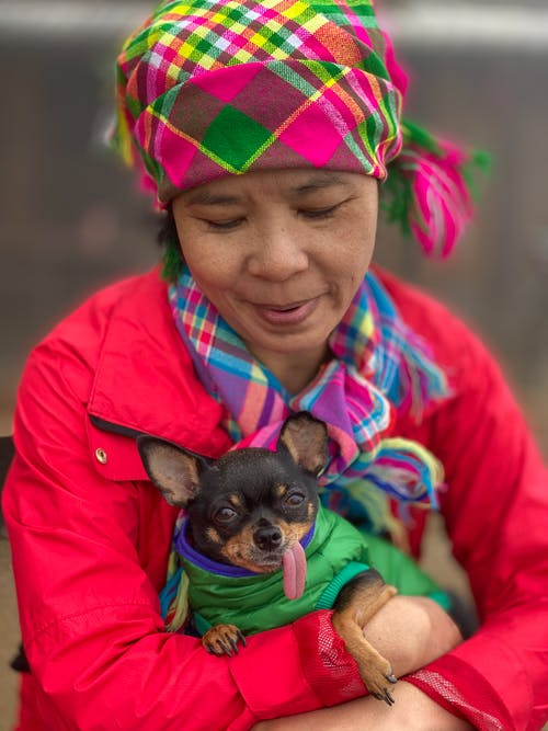 Funny purebred puppy in hands of Asian woman