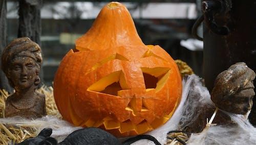 Free stock photo of halloween, halloween pumpkin, pumpkin