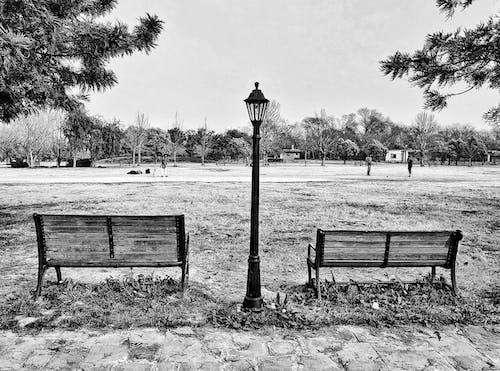 가벼운 게시물, 목조 벤치, 블랙 앤 화이트, 정원 공원의 무료 스톡 사진