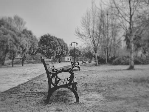 공원 벤치, 블랙 앤 화이트의 무료 스톡 사진
