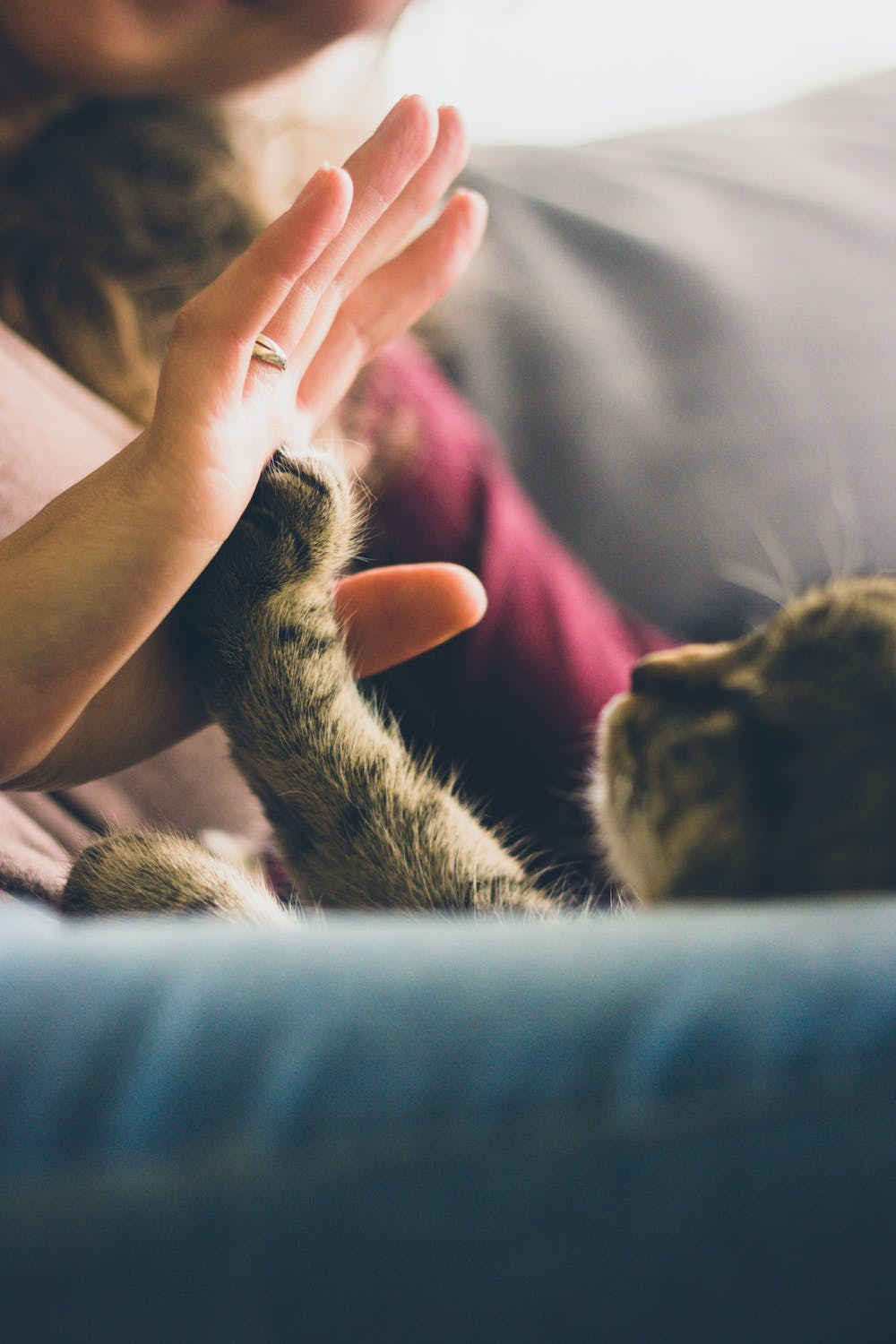 new kitten care kitten things things i need for a kitten brooklyn cat sitter guide for new cat owners best things for kittens taking care of a new kitten best way to raise a kitten things to buy before getting a kitten essentials for getting a kitten new kitten 101 bringing up a kitten caring for new cat
