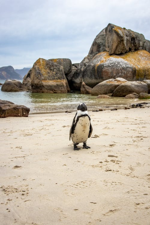 Penguin on Brown Sand