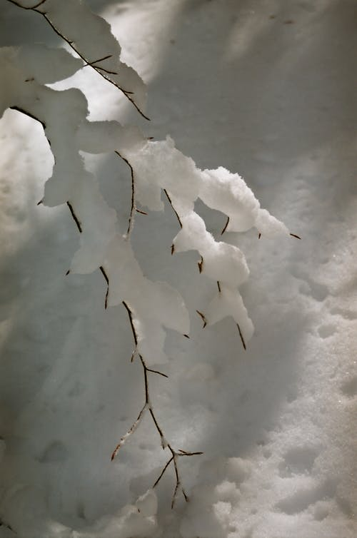 From above of branches of leafless tree covered with snow growing in winter forest