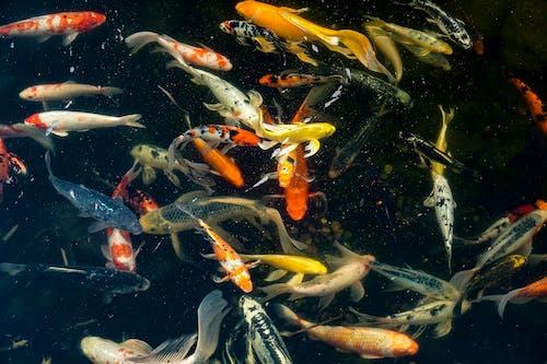 Gratis lagerfoto af alotoffish, appelsin, blå, find nemo
