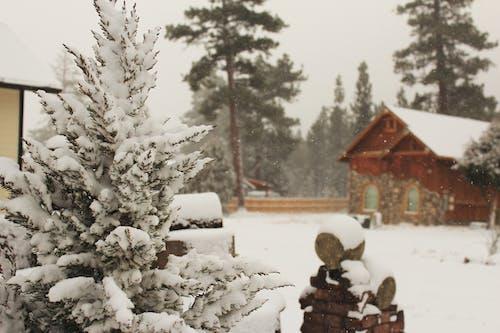 12月, アイス, キャビン, クリスマスの無料の写真素材