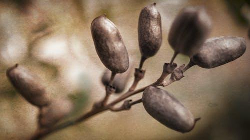 Free stock photo of fall, macro, plants, seeds