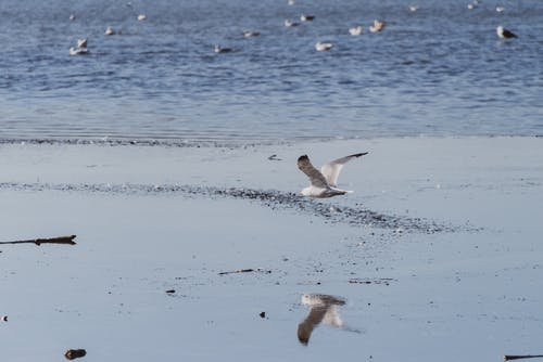 White and Brown Bird Flying over the Sea