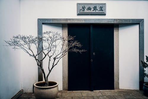 Potted plant near entrance of oriental house