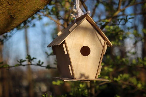 Free stock photo of animals, bird house, birds, forest