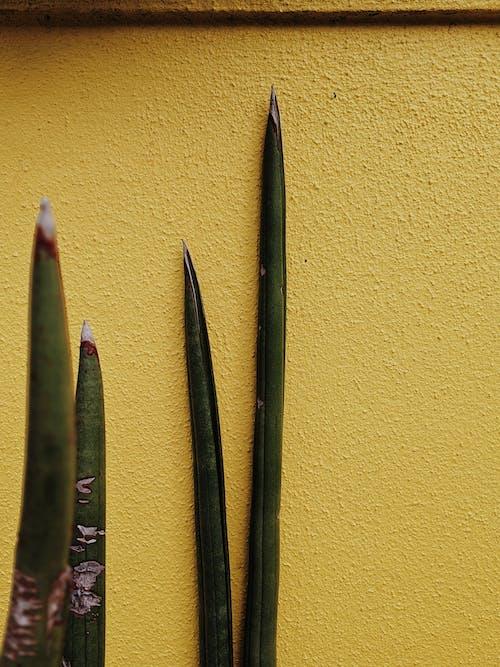 Green Plant Beside Wall