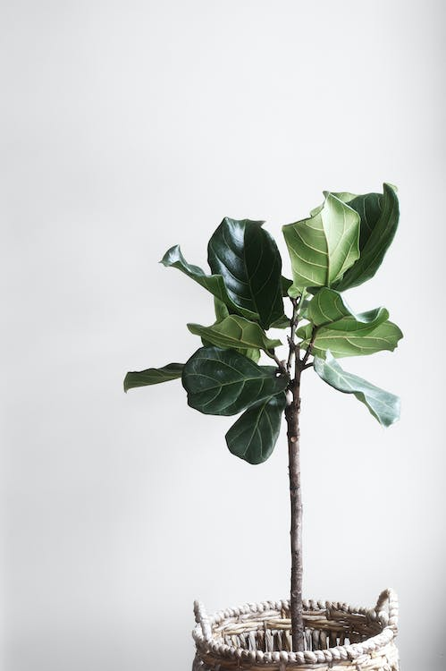 Green Indoor Plant in a Room