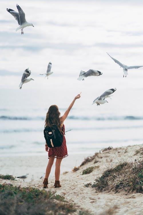 Woman At The Beach Feeding The Birds