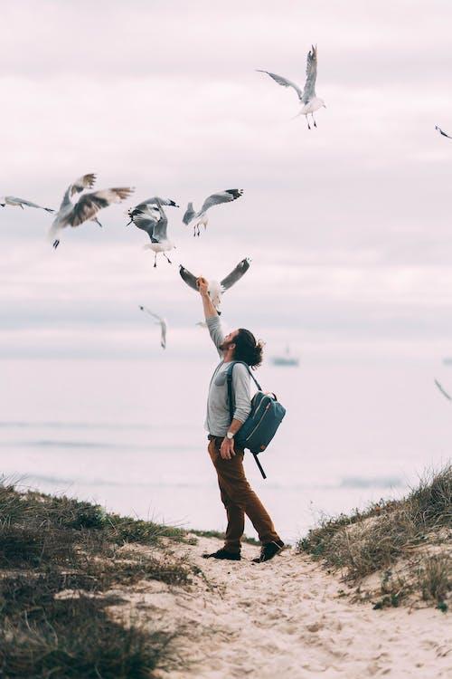 Gratis arkivbilde med Cape Town, fritid, fugler