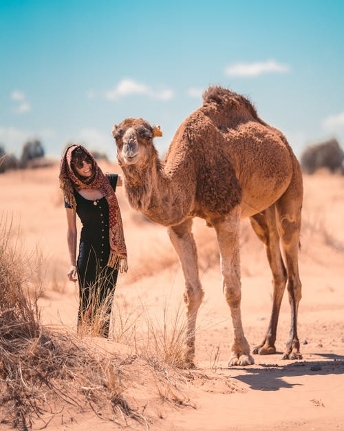 Photo Of Person Beside Camel