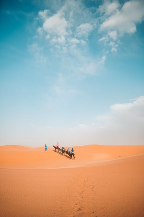People Riding Camels In The Desert
