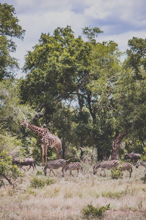 Kostenloses Stock Foto zu afrika, bäume, busch, draußen