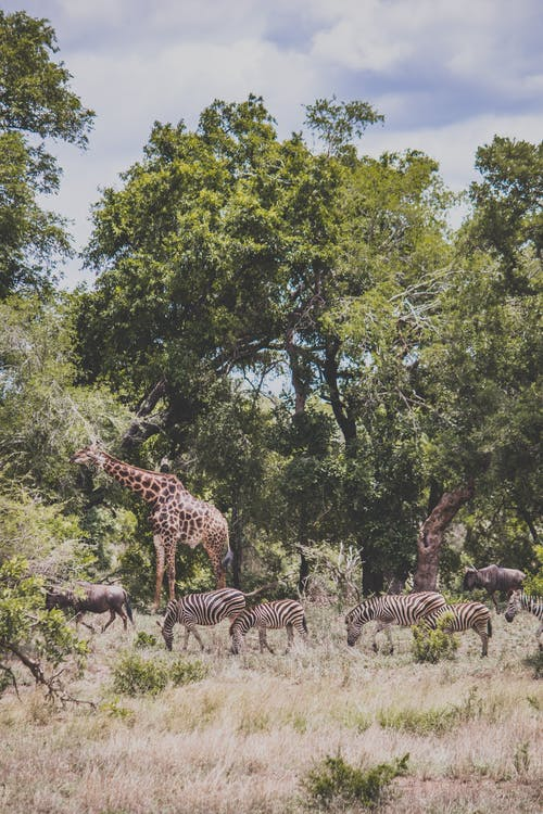 Zebra Standing Near Green Trees