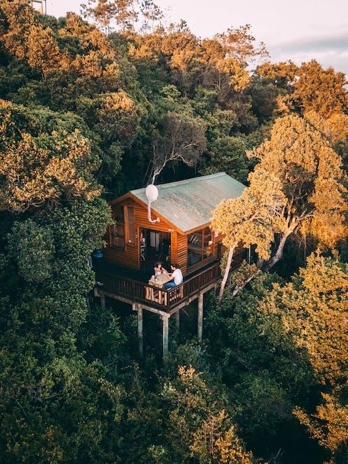 Kostenloses Stock Foto zu architektur, bäume, baumhaus