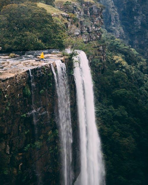 Photos gratuites de afrique du sud, arbres, automne, bord
