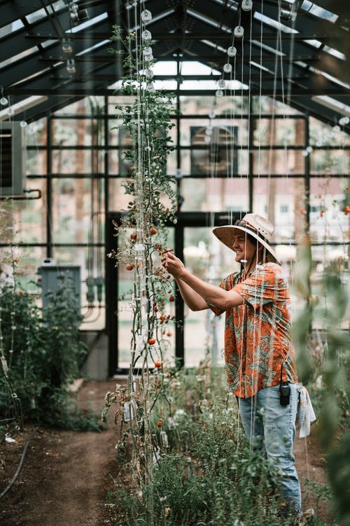 Man in Brown Hat and Blue Denim Jeans Standing Near Green Plants