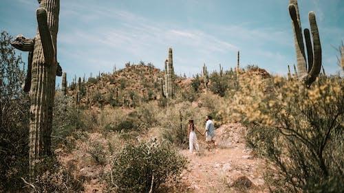 Kostenloses Stock Foto zu arizona, busch, dürr, kakteen