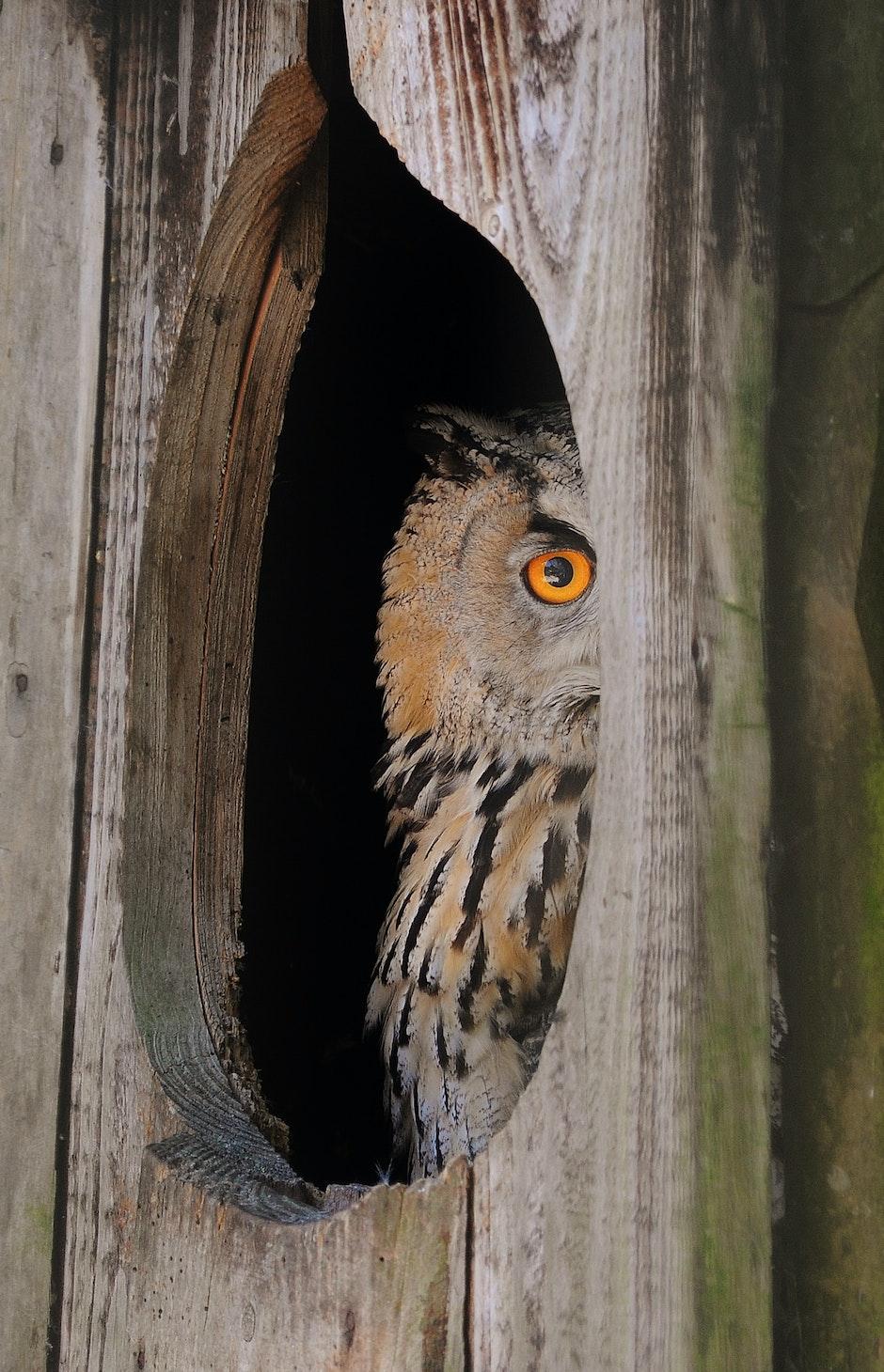 animal, bird, owl
