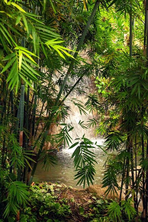 Foto d'estoc gratuïta de bambú, cascada, exuberant, flora
