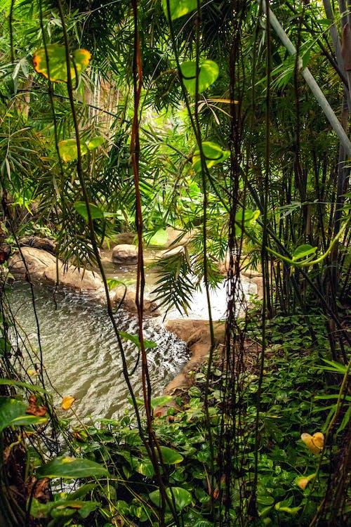 Tropical Plants near a River