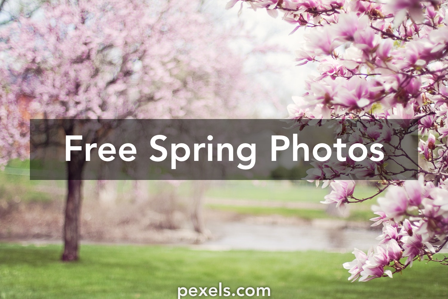 500 Colorful Spring Images Pexels Free Stock Photos
