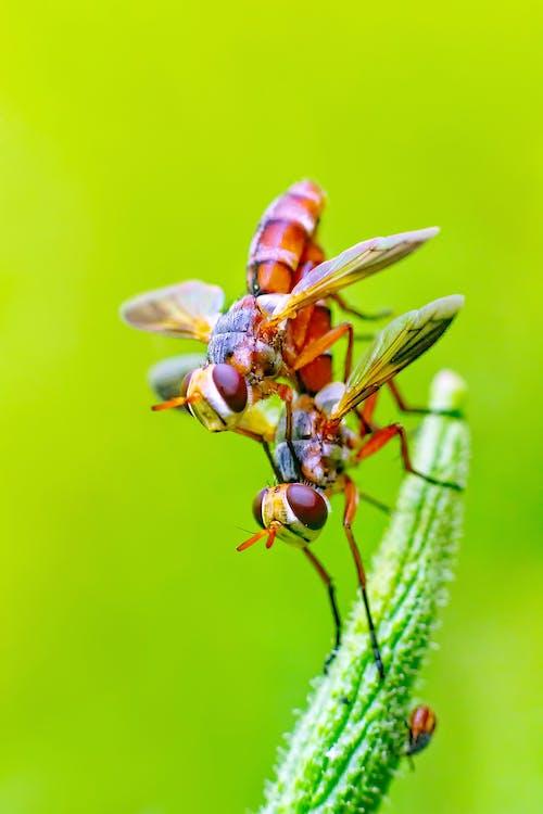 緑の葉に2つのオレンジと黄色の飛んでいる昆虫