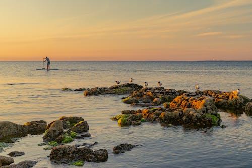 Gratis arkivbilde med daggry, hav, horisont, padle boarding