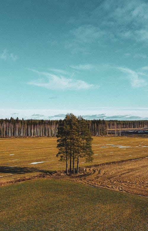 Fotos de stock gratuitas de agricultura, arboles, campo, campos de cultivo