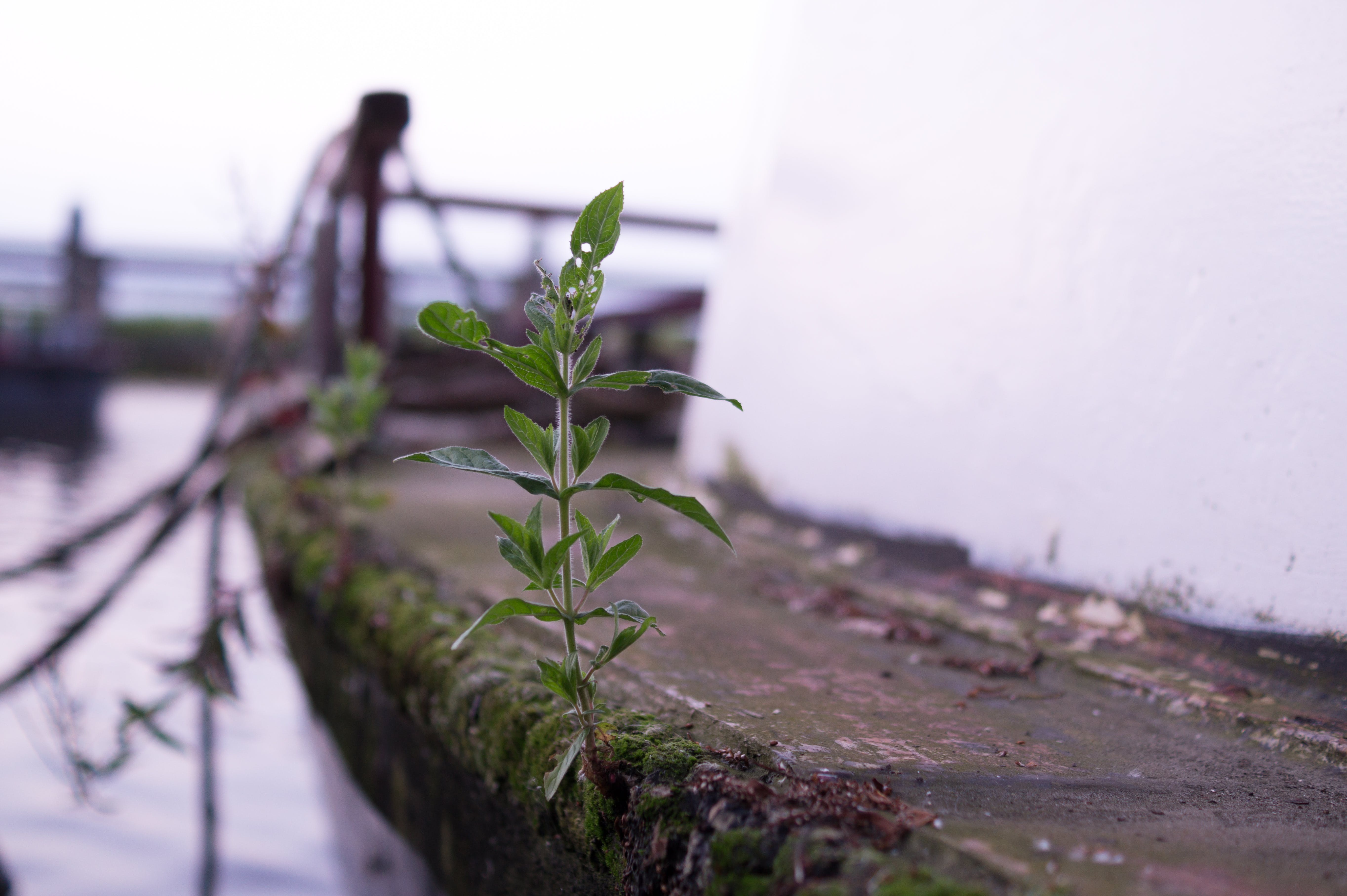 Free stock photo of boat, cool, grown, life