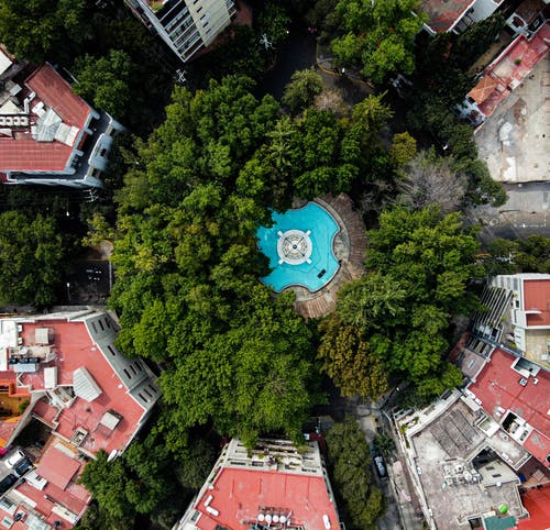 Aerial View of Green Trees and Buildings