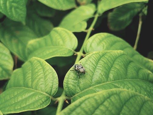 Black Bug on Green Leaf