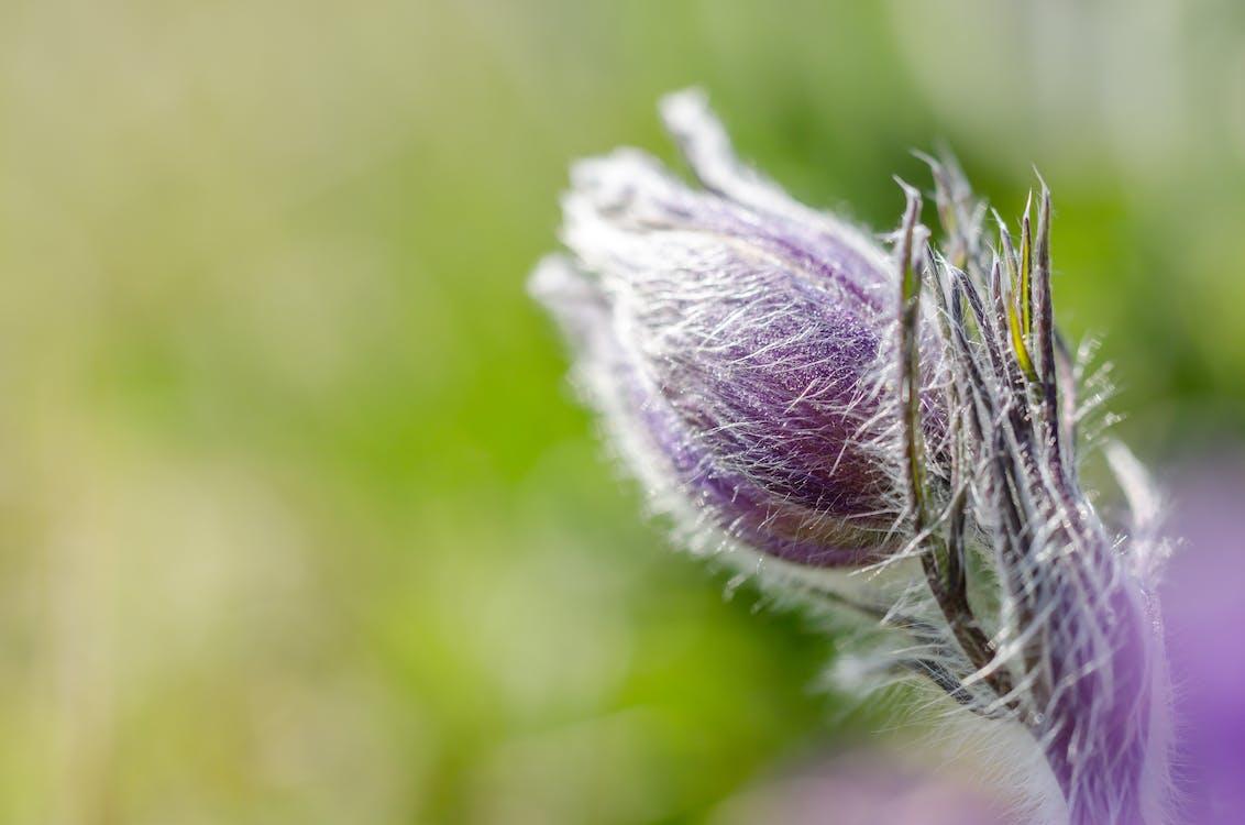 Purple Flower Bud In Macro Photography