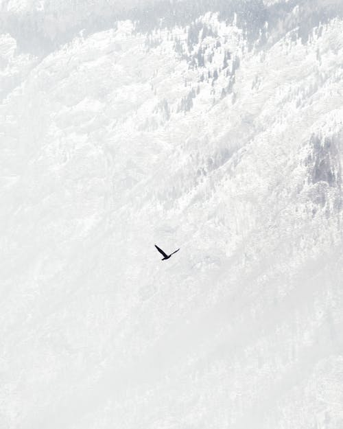 Bird Flying Over Snow Covered Mountain