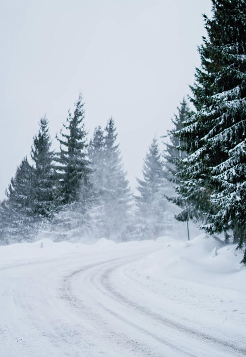 Snow Covered Road Near Green Pine Trees
