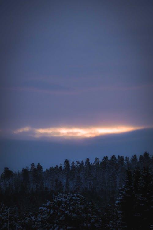 Ilmainen kuvapankkikuva tunnisteilla metsä, pilvinen, puut, taivas