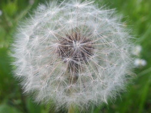 白, 緑, 花, 風の無料の写真素材