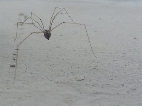クモ, 壁, 白, 足の無料の写真素材