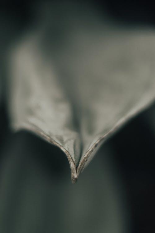Základová fotografie zdarma na téma abstraktní, černobílý, jednobarevný, list