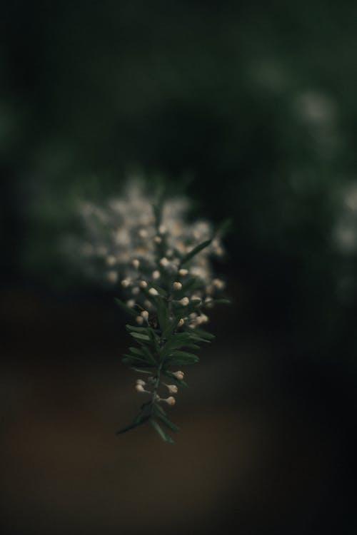 Základová fotografie zdarma na téma akro, rostlina, strom, závod