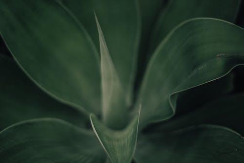 Základová fotografie zdarma na téma abstraktní, barva, čerstvý, flóra