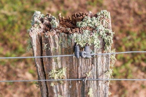 Free stock photo of old fence post, tasmania