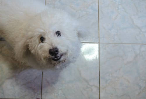 Free stock photo of doggy, pet, photo