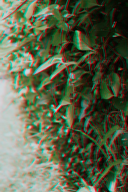 Free stock photo of anomaly, glitch, green