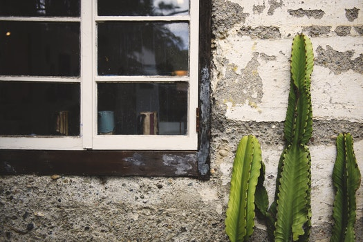 Free stock photo of wall, plant, window, antique