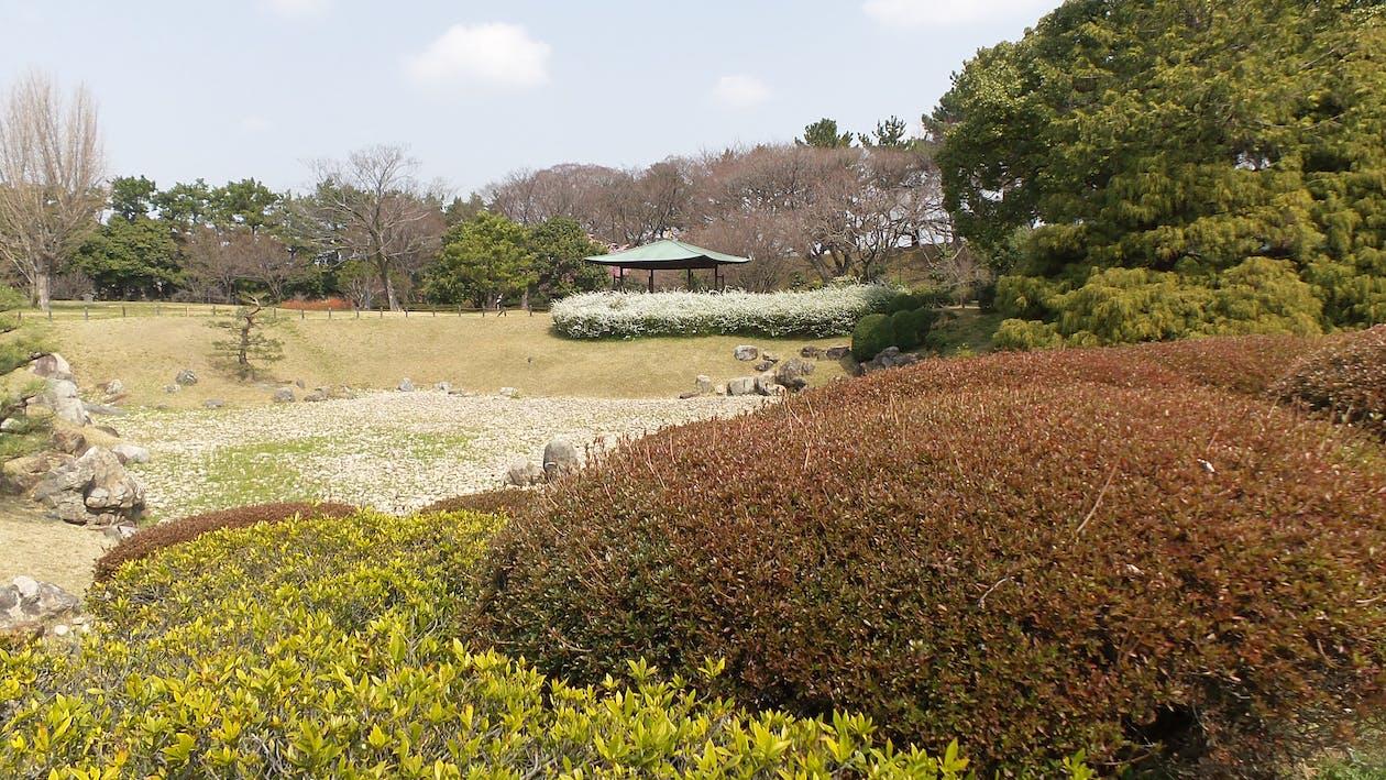 Free stock photo of japan, Nagoya, nature